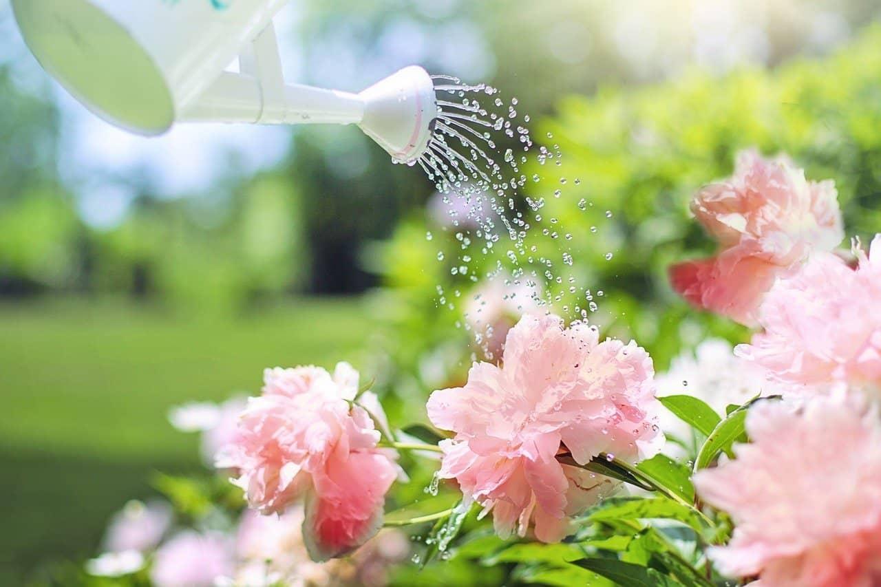jak-usetrit-za-vodu-zalevani-kvetin